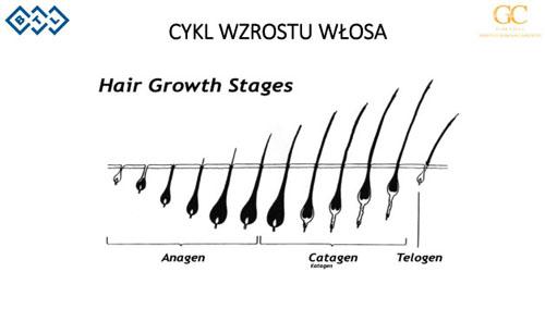 Cykl wzrostu wlosa